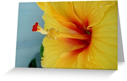 ELECTRIC HIBISCUS by May Lattanzio