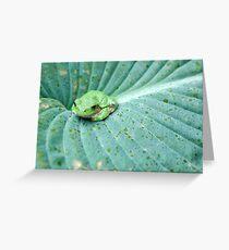 Rays on a Hosta. Greeting Card