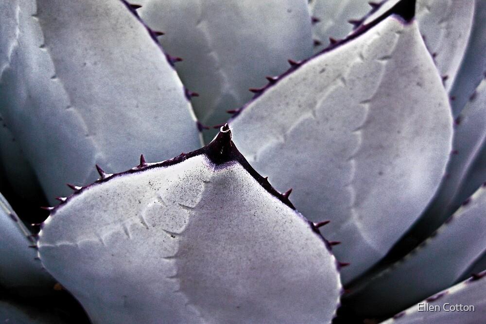 Desert Beauty by Ellen Cotton