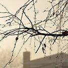 Foggy morning by Karen E Camilleri