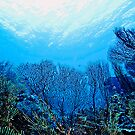 Underwater Garden by Melissa Fiene