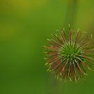 Buttercup bud by Al Williscroft