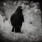 Black Crow  by gothicolors