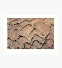 Concrete Acorn - Detail Art Print