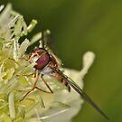 Pollination 25 by Gareth Jones
