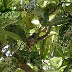 Surprise In the Tree by Carla Wick/Jandelle Petters
