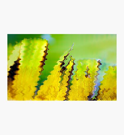 Dino tail reflections Photographic Print