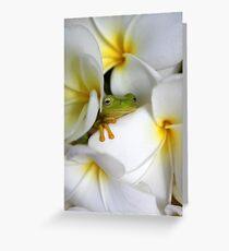Frangipani Dreaming - Award Winner Greeting Card