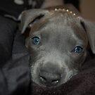 New blue eyes by BellaStarr