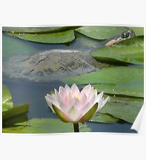 Surprise in the Water Lilies Poster