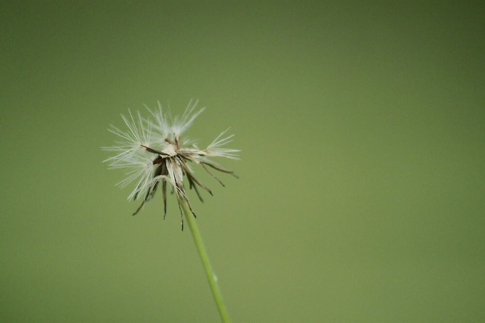 make a wish by lisjen