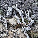 Survival in Western Australia by Bev Woodman
