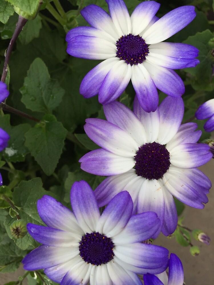 Purple & White by Douglas E.  Welch