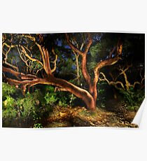 Red Gums Lightpainted Poster