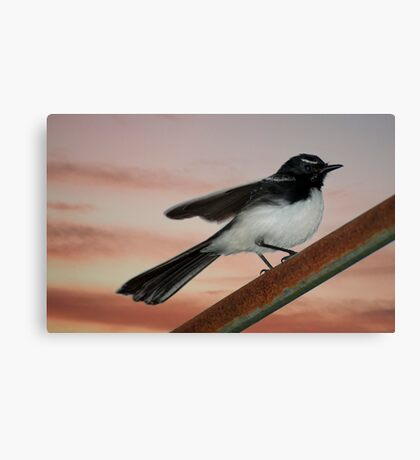 Willy Wagtail 2 Canvas Print