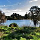 Old Noarlunga Wetlands by Ali Brown