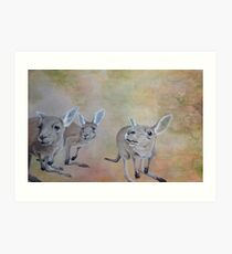 The Roos Art Print