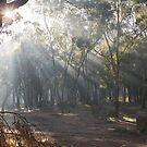 Foggy Forrest by GailD