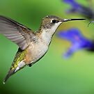 Hummer Action! by Anthony Goldman