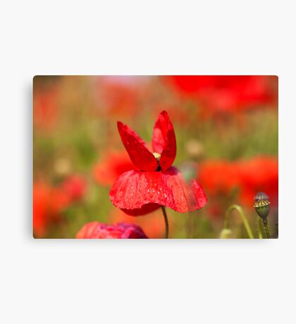 Butterfly Poppie Canvas Print