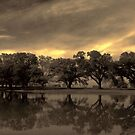 trees in sepia by leapdaybride