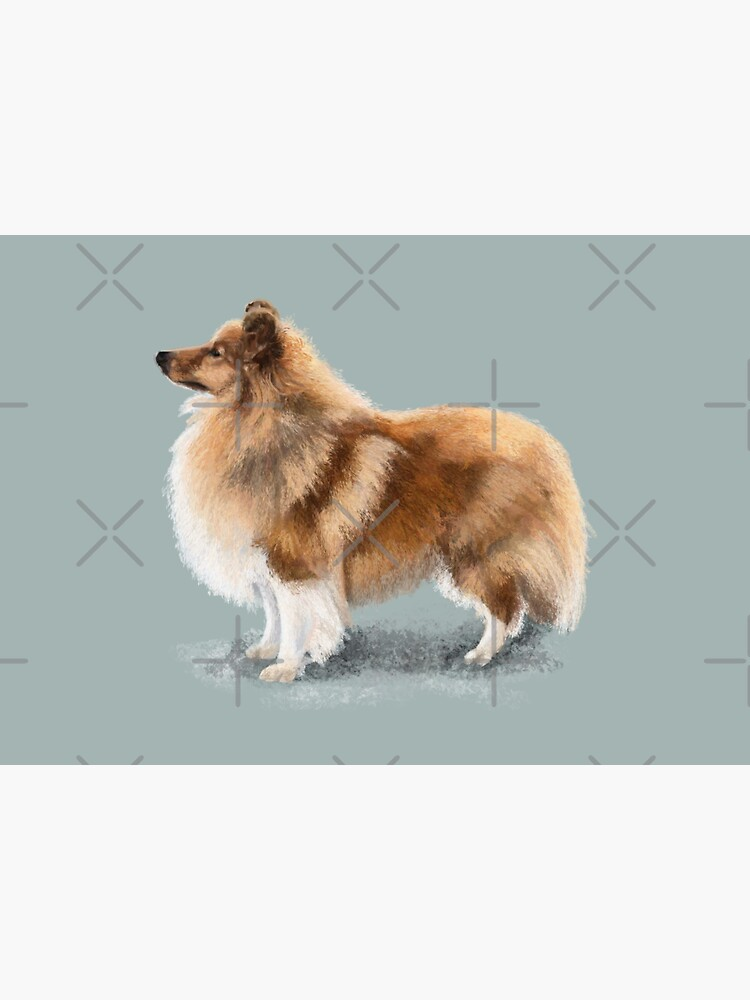 The Shetland Sheepdog by elspethrose