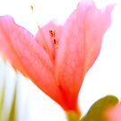 pink and white by leapdaybride