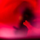 In Bloom 2867 by Zohar Lindenbaum