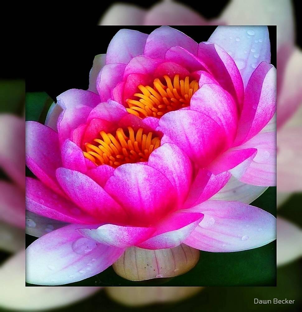God's flowers © by Dawn Becker