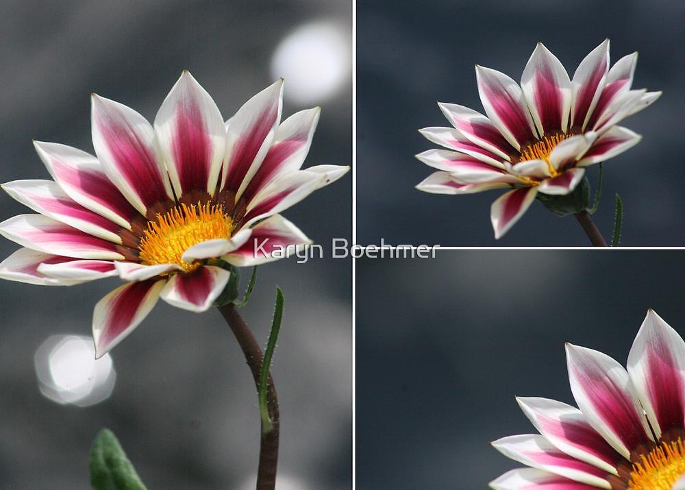 Triple Purple & White Flower by Karyn Boehmer