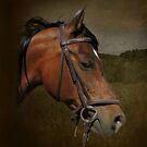 Renaissance Horse Portrait by Kelley Jo