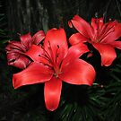 Lilies at Night by Tracy DeVore