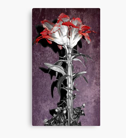 Velvet Flower Canvas Print