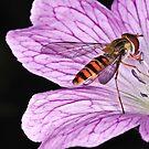 Pollination 26 by Gareth Jones