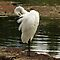 WHITE BIRD CHALLENGE