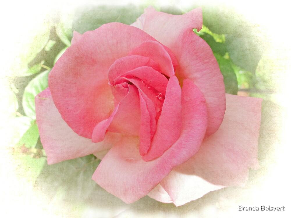 Sweet and Pink by Brenda Boisvert