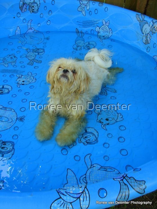 Henri knows how to stay cool by Ronee van Deemter
