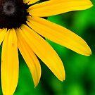 Perfect Nature Closeup  by Allison  Flores