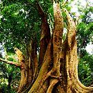 Champion tree by CriGa Photography