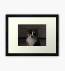 Domesticated Hunter. Framed Print