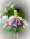 Holly's Beauty by Ray Clarke