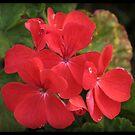 Flower Series Six by Wzard