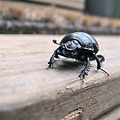 Beware of the Beetle by Ritva Ikonen