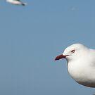 Gulls at Little Wategoes by Louise Linossi Telfer