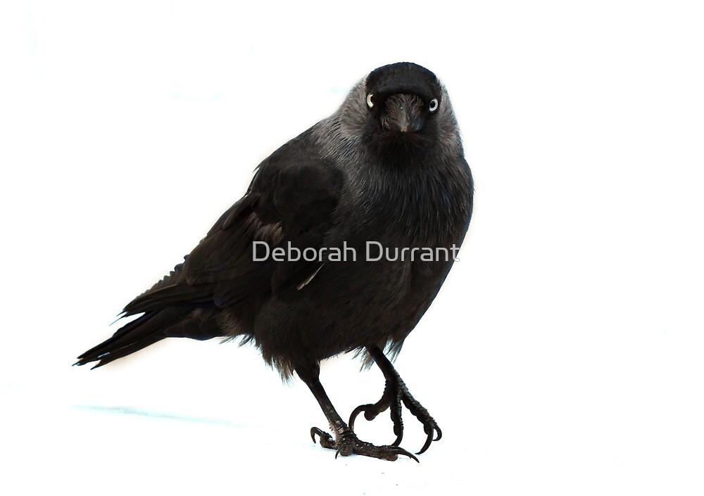 'You looking at me?' by Deborah Durrant