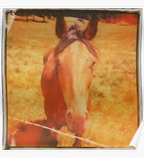 Horse Is Red Poster