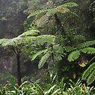 Millaa Millaa Falls, Queesland, Australia by Dean Bailey