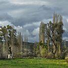 Roadside Trees by Peter Hammer