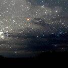 Star Lit Night © by Dawn Becker