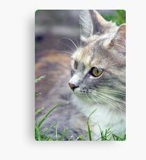 beautiful kitten  Canvas Print